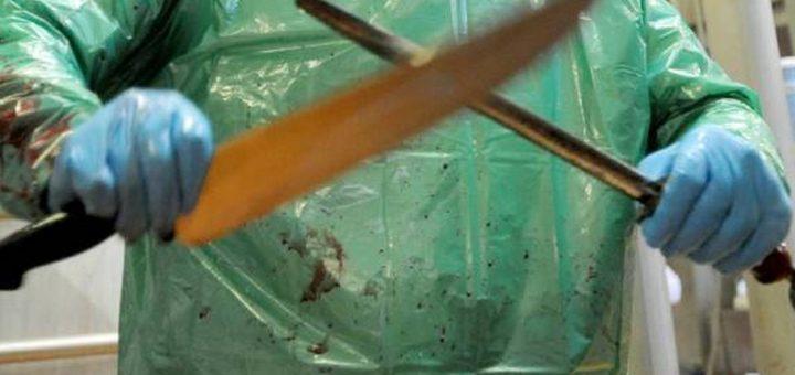 Maltraitance animale : Le Gouvernement refuse de mettre des caméras dans les abattoirs Français !