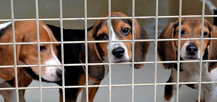 Quand « 30 Millions d'amis » publie une Fake News sur l'expérimentation animale !
