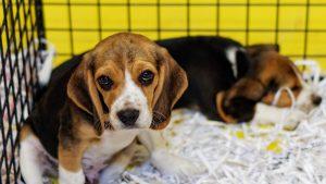 N'importe qui peut vendre son animal de compagnie à un laboratoire pour des expériences scientifiques !
