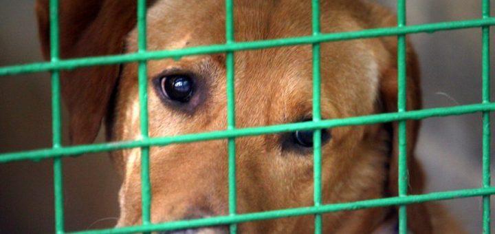 Pétition : Pour l'interdiction de la vente d'animaux de compagnie aux laboratoires d'expériences scientifiques !