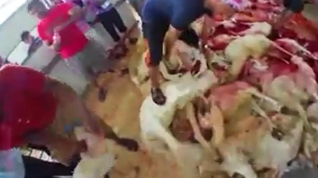 Voici comment se déroule la fête Aïd-el-Kébir chez les Musulmans !