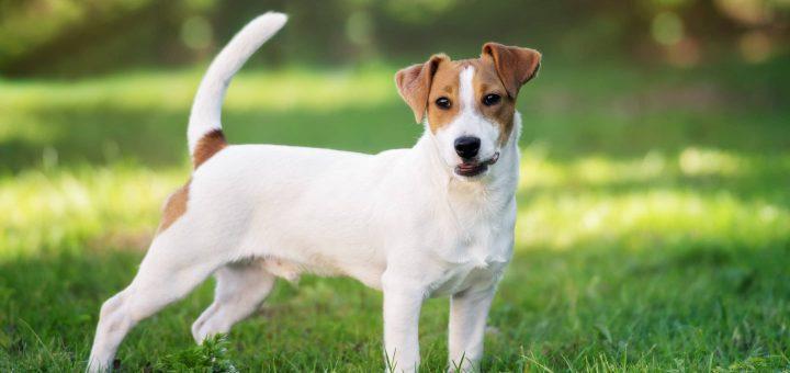 Son chien meurt asphyxié dans le coffre de sa voiture sous 36 degrés, il écope d'une simple amende !