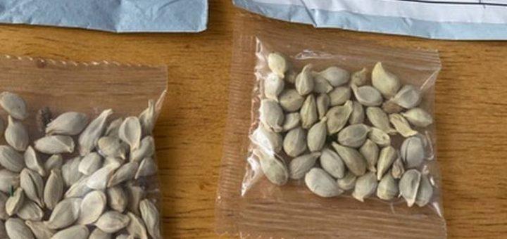 Attention : Que faut-il faire si vous recevez un colis non sollicité contenant des graines en provenance de Chine ?